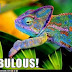 Colour colour colour colour colour Chameleon