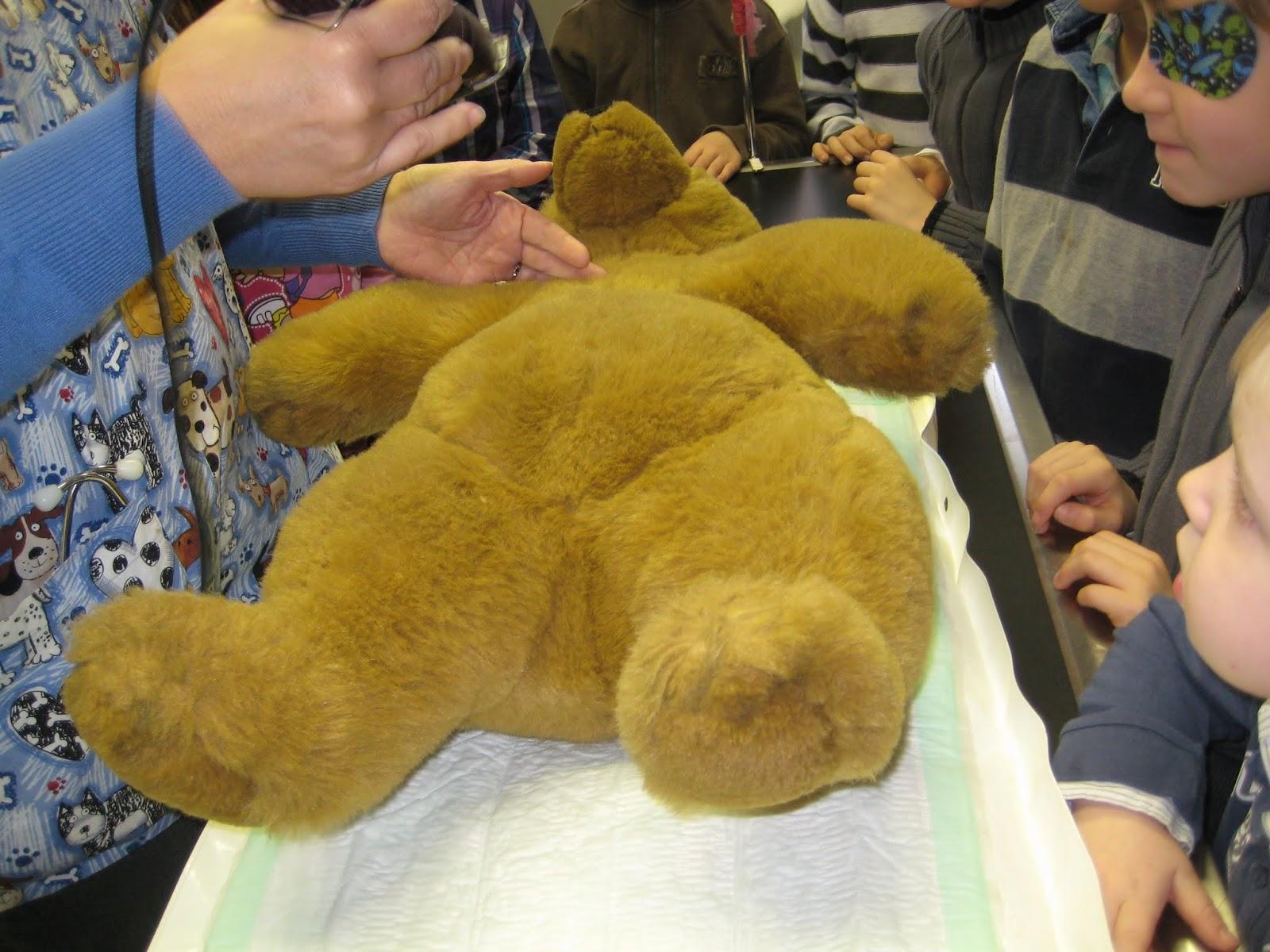 dierenarts de beer