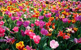 Que significa soñar con la primavera