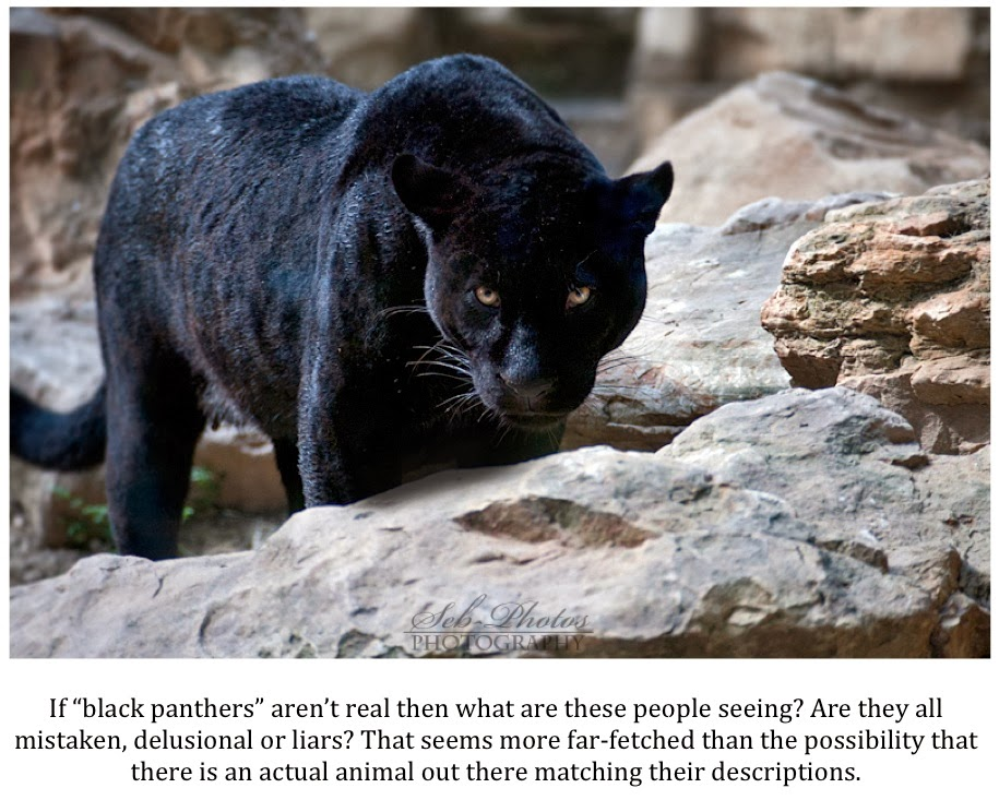 3d048f1a475c Texas Cryptid Hunter  The Latest Black Panther Sighting Reports