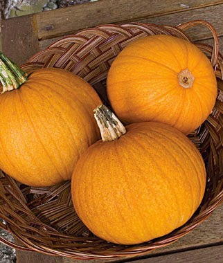 List of different types of pumpkins: Jack O' Latern