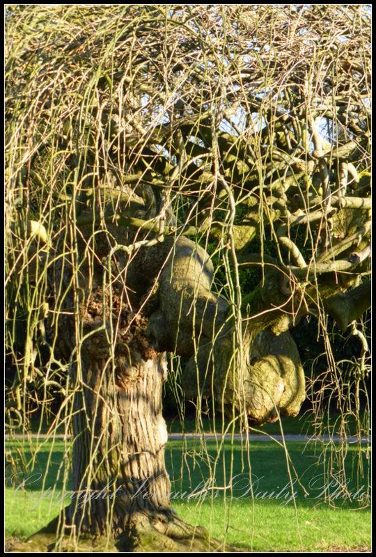 Trees Petit Trianon Versailles