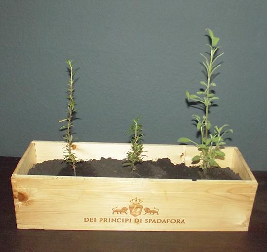horta, vaso de madeira, vaso, vaso para temperos, temperos, faca voce mesmo, diy, caixa de vinho