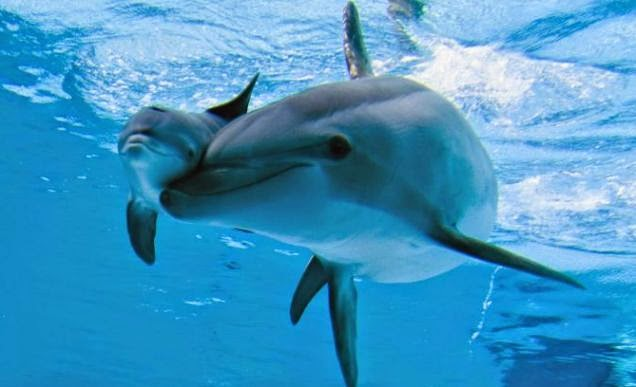 Very Rare Footage of a Wild Dolphin Giving Birth (VIDEO)