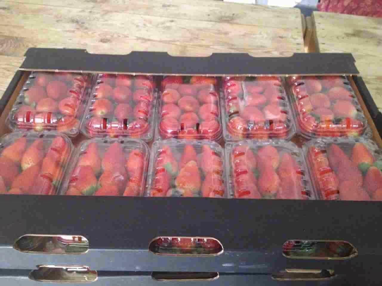 strawberry_in_egypt