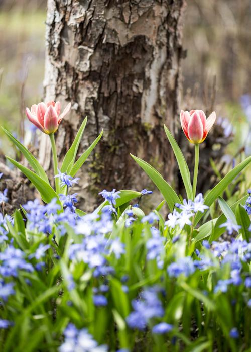 garden by gretchen gretchen