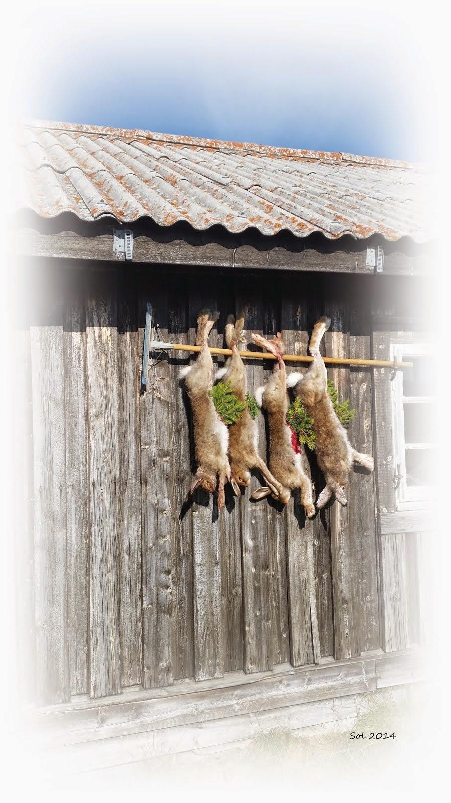 Jakt på Gåla 2014