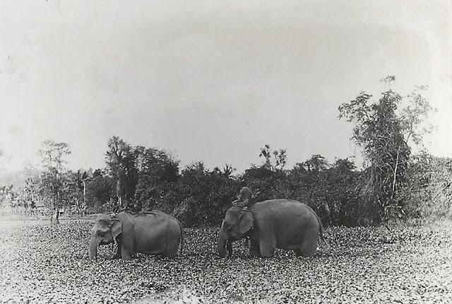 Éléphants en marche