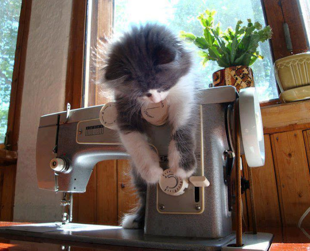 kitten playing with sew machine, funny cats, cat photos, cat pictures