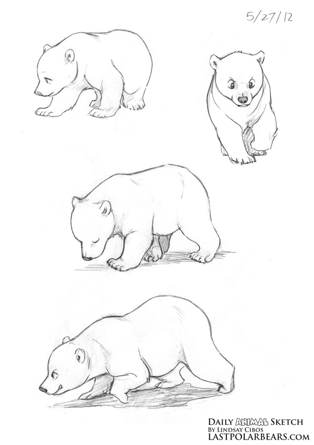 Grizzly bear cubs drawing - photo#11