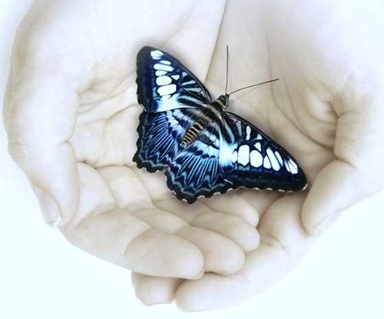 Притча о бабочке