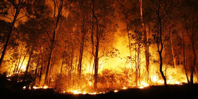 Hutan Lereng Gunung Slamet Kembali Terbakar
