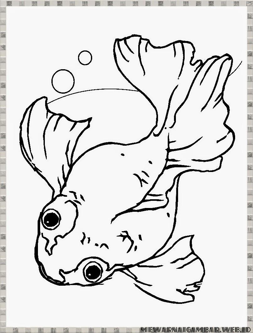 Belajar Mewarnai Gambar Ikan Mas Koki