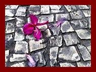 Flor no concreto