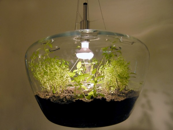 Glass Greenhouse Lamp