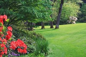 Scottsdale Landscape Services