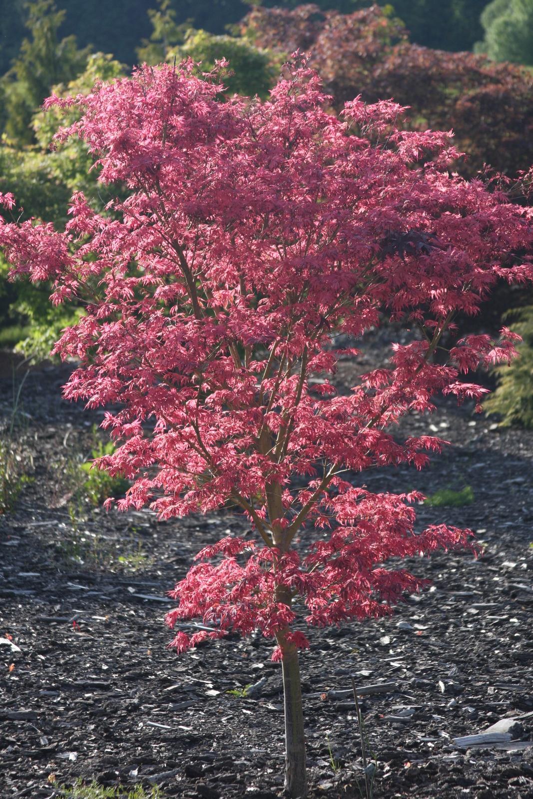 Flora Wonder Blog Buchholz Plant Introductions