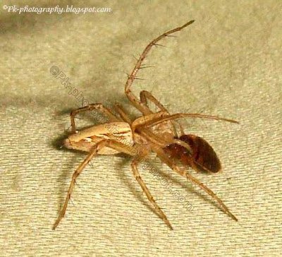 Do spiders eat bed bugs?