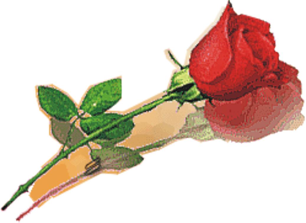 dan berkunjung ke blog sederhana tentang Gambar-gambar bunga mawar