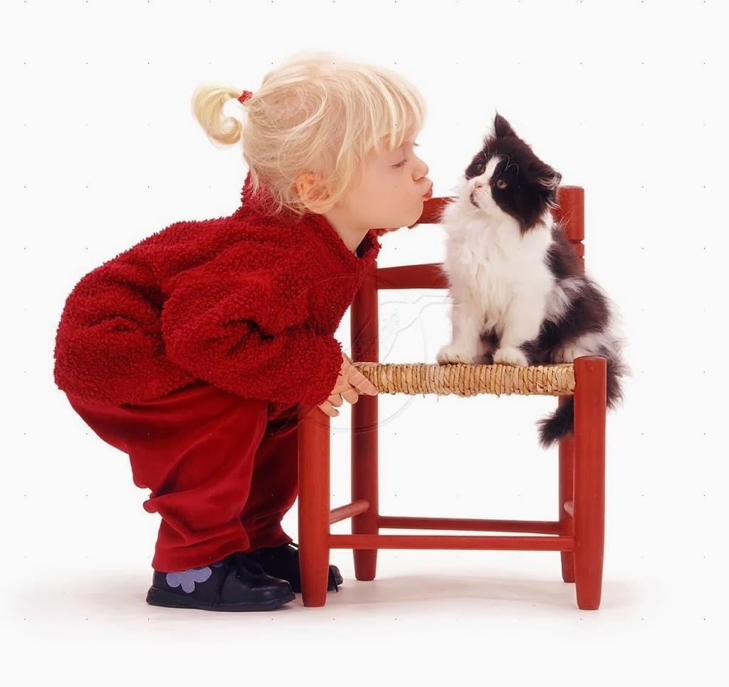besando a un gatito