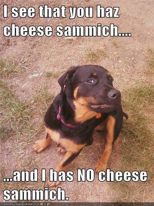 Funny Memes For Animals : Funny animal captions part pics amazing