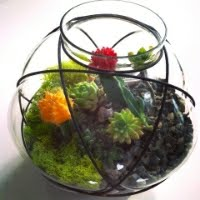 Magical Succulent Terrarium DIY