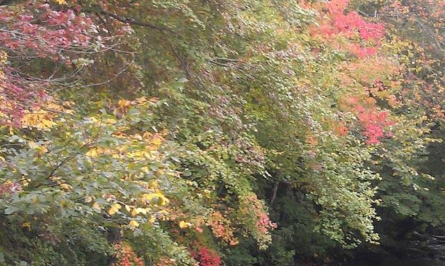 Colorful trees near stream