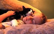 Adoptez un chat âgé, que du bonheur !