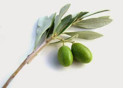 Χυμός από φύλλα ελιάς