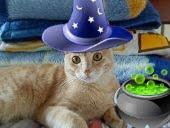 Félix, um encanto de gato