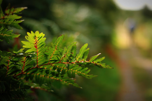 colourful fern
