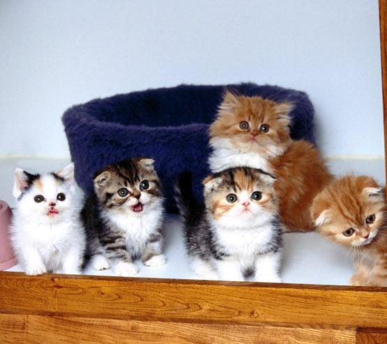 Group icon feline cute kitten