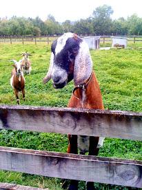 Sunnybrook Farm Visit