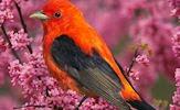 Aves exóticas, birds y pajarillos cantores I