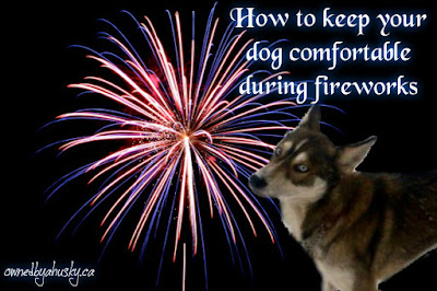 How To Keep Your Dog Comfortable During Fireworks