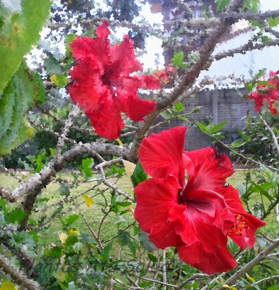 http://plantasmedicinalesatusalud.blogspot.com.ar/