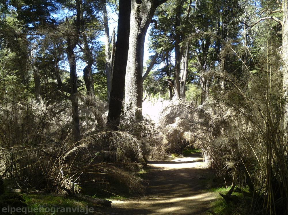 Bariloche, senda, picada, bosque, cañas