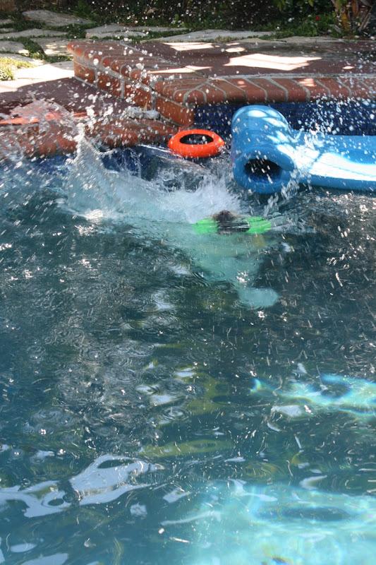 Big Labrador splash
