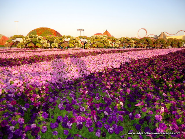 more flowers at Dubai Miracle Garden