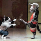 Video: Kungfu Cat
