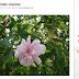 Pinterest : Signaler Un Pin, Un Commentaire, Un faux profil