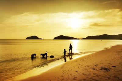 Spaziergang am Strand mit Hund