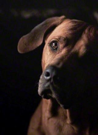 La storia dei cani allo specchio pier luigi gallucci - Cane allo specchio ...