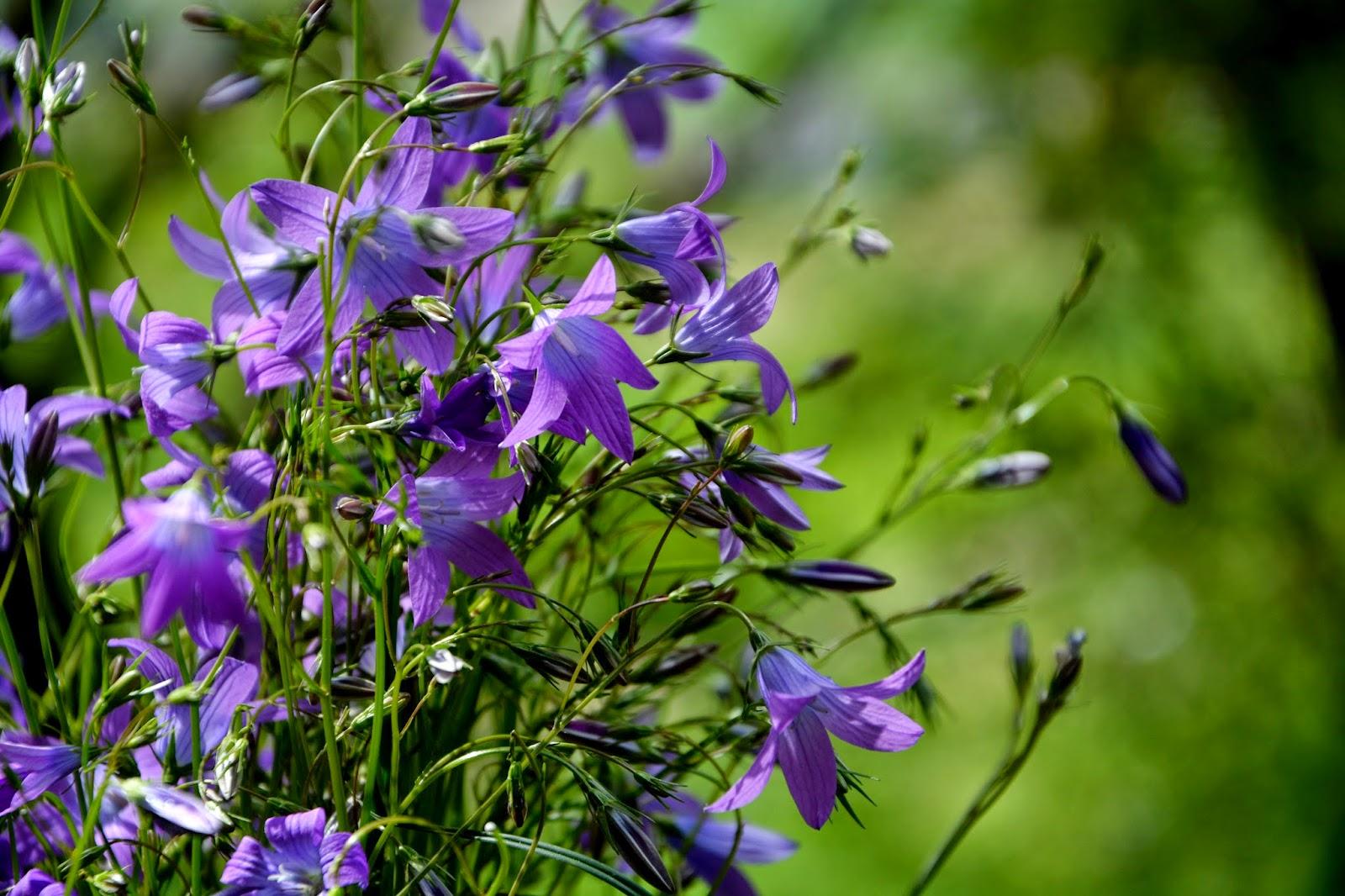 Vom HÜgel Steiermark Schnittblumen Frische Strause Garten