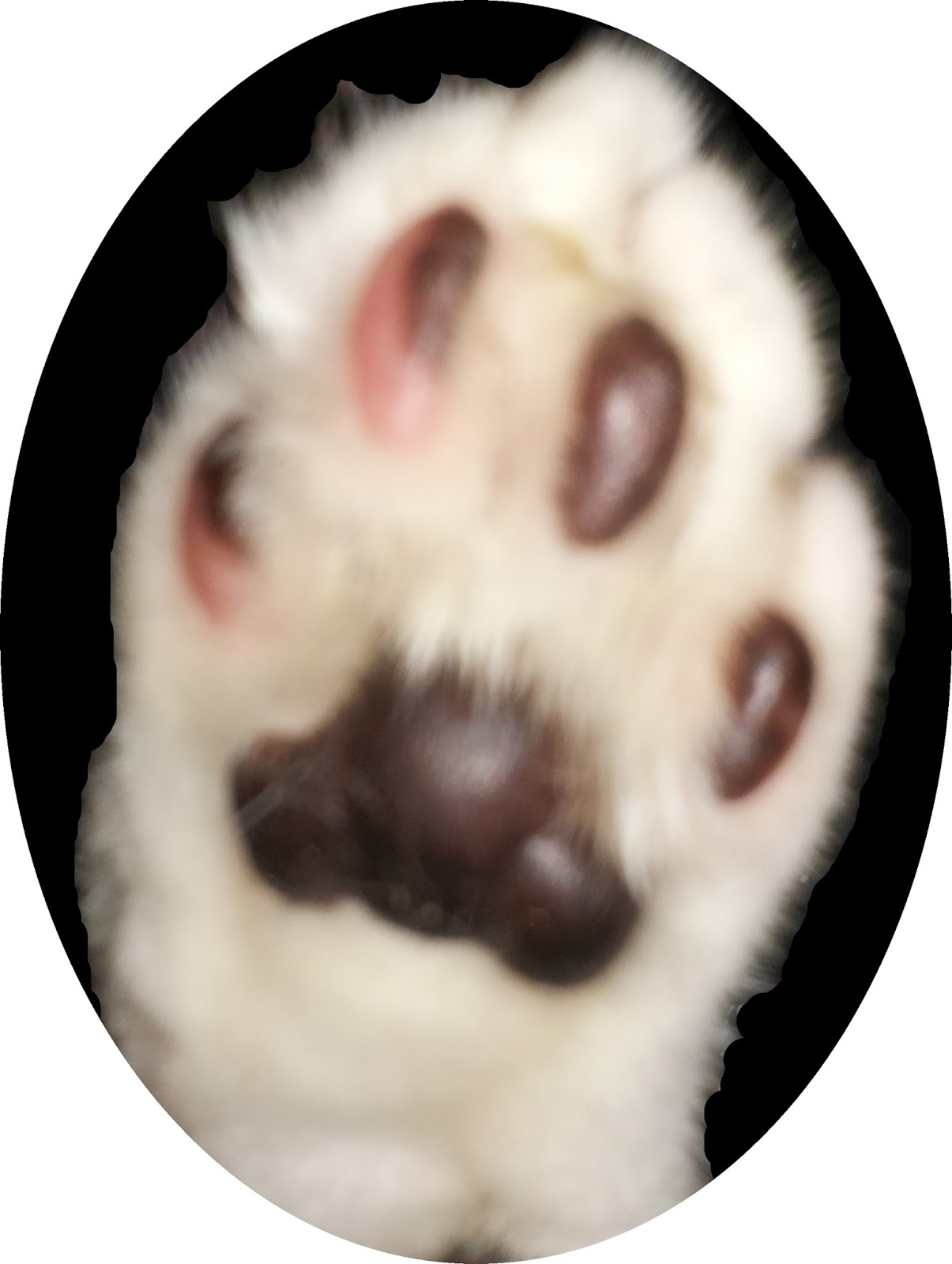 Image of Mr Bumpy's paw.