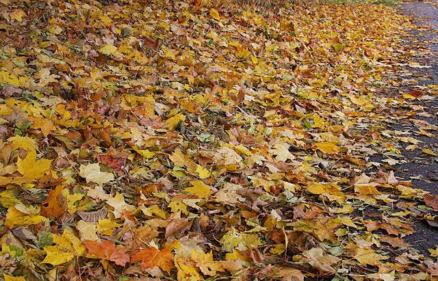 осень в Риге