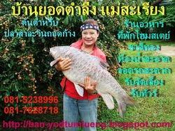 แม่สะเรียง กินปลาสาละวิน