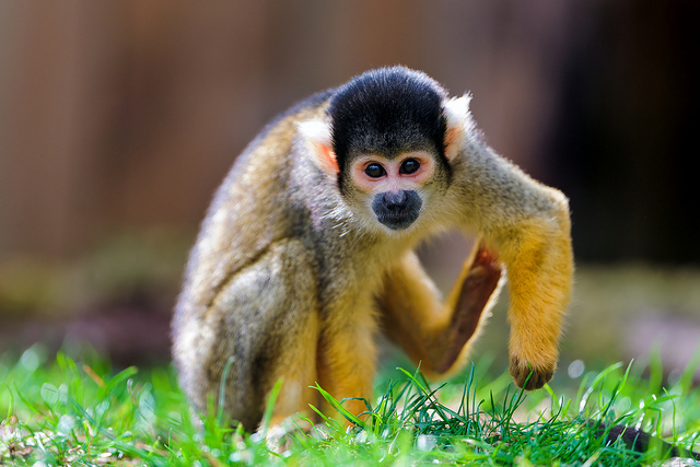 cute pictures of monkeys