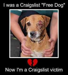 Dog Rehome Rescue Ontario Hypoallergenic Canada