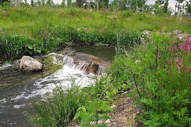 Flussbett und Blumenwiese